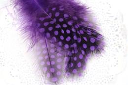Перо цесарки, Purple