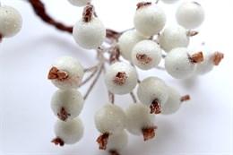 Ягоды рябины белые