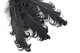 Гусиное перо, Black